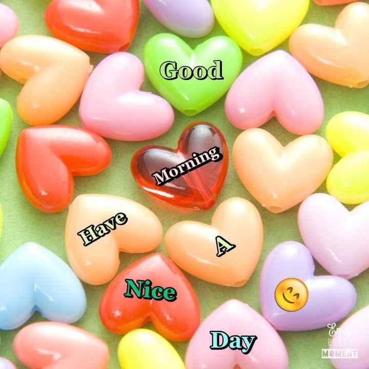 🌞সুপ্রভাত - Good Morning Have Nice Day MOMENT - ShareChat