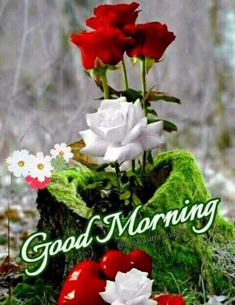 🌞সুপ্রভাত - Good Morning @ anshuumraoasha - ShareChat