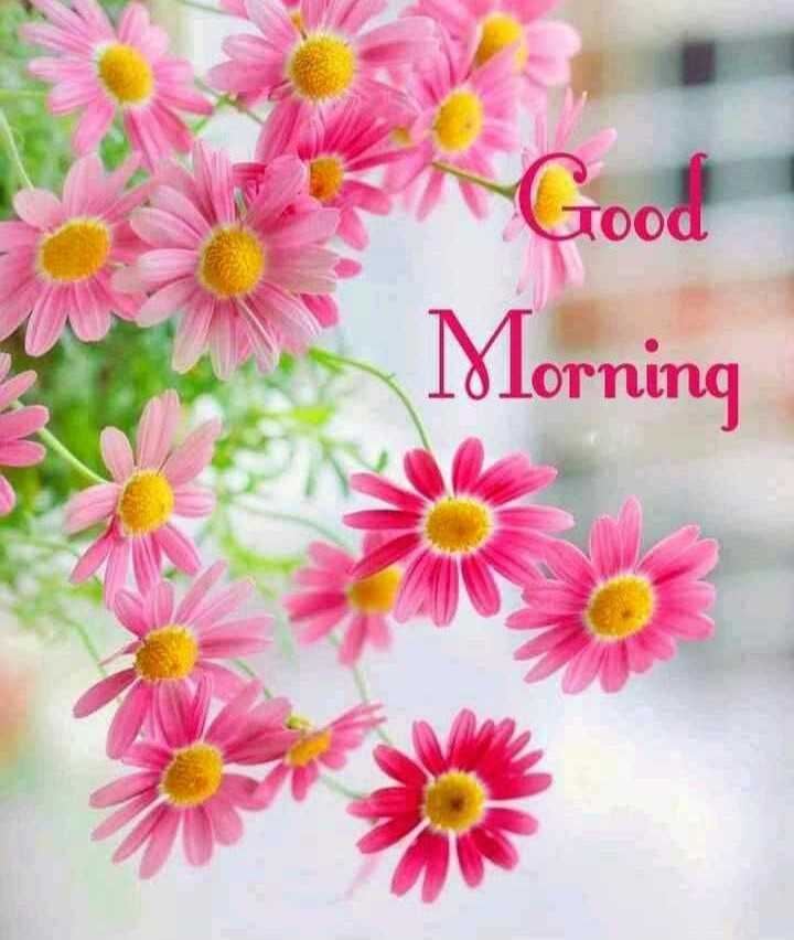 🌞সুপ্রভাত - Good Tood Morning - ShareChat