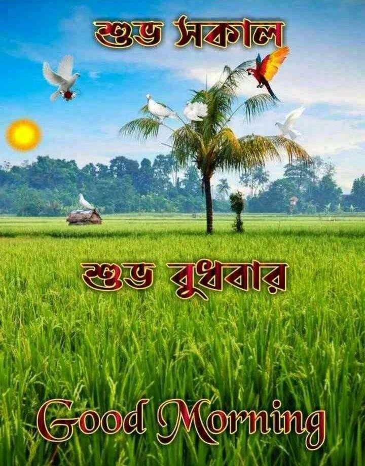 🌞সুপ্রভাত - ইভি দাতা ইভ বুধবার Good Morning - ShareChat