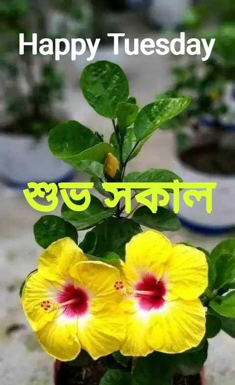 🌞সুপ্রভাত - Happy Tuesday শুভ সকা - ShareChat