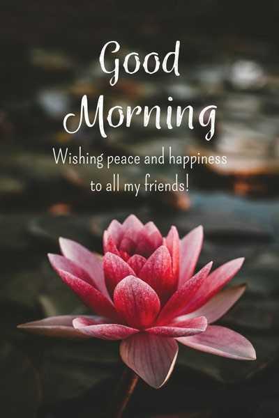 🌞সুপ্রভাত - Good Morning Wishing peace and happiness to all my friends ! - ShareChat