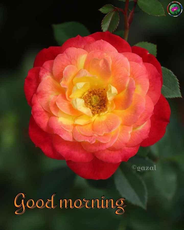🌞সুপ্রভাত - ©gazal Good morning - ShareChat
