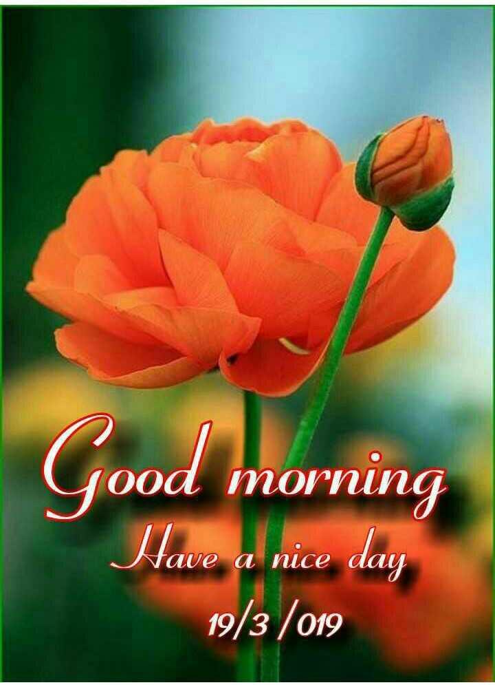 🌞সুপ্রভাত - Good morning Have a nice day 19 / 3 / 019 - ShareChat