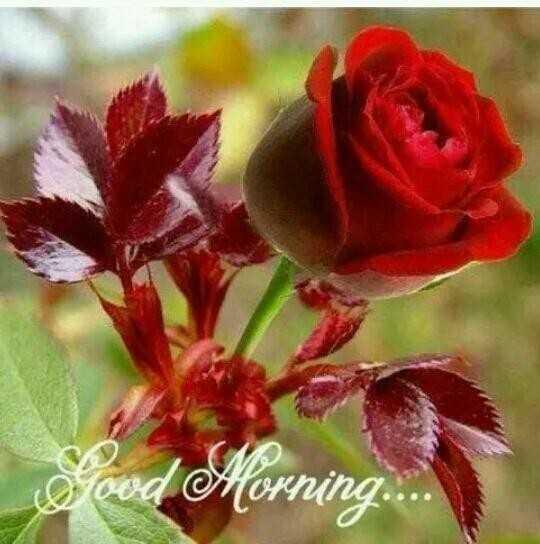 🌞সুপ্রভাত - Sood Morning . . . - ShareChat