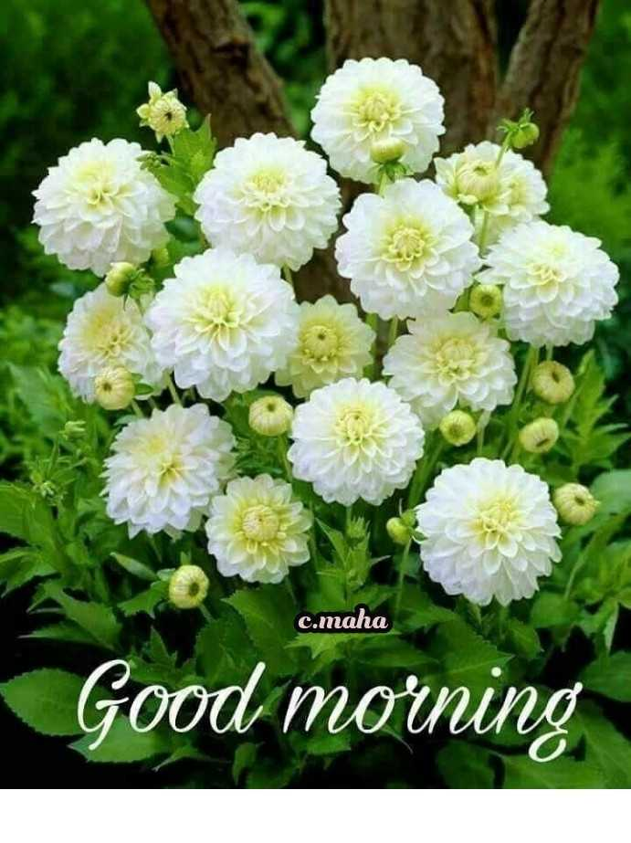 🌞সুপ্রভাত - c . maha Good morning - ShareChat