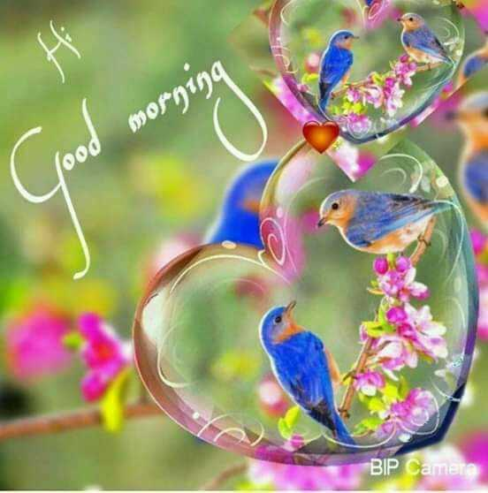 🌞সুপ্রভাত - Good morning BIP Camera - ShareChat