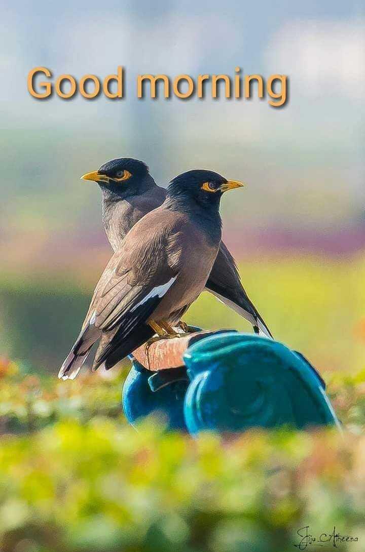 🌞সুপ্রভাত - Good morning Sie : Areena - ShareChat