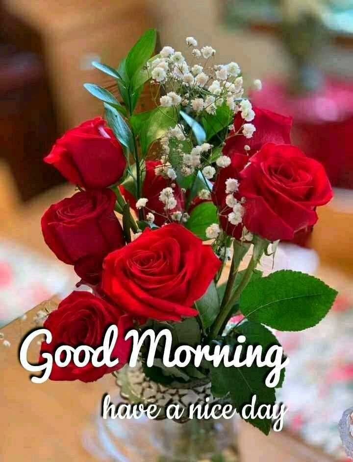 🌞সুপ্রভাত - Good Morning have a nice day - ShareChat