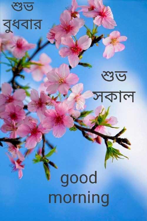 🌞সুপ্রভাত - শুভ বুধবার শুভ সকাল good morning - ShareChat
