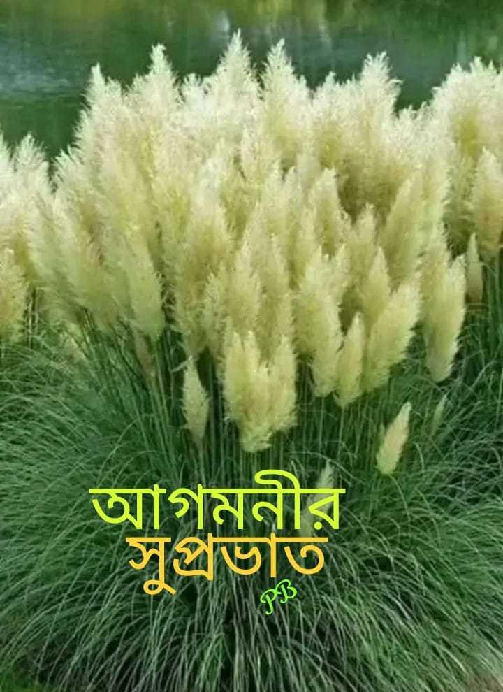 🌞সুপ্রভাত - আগমনীর সপ্রভাত - ShareChat