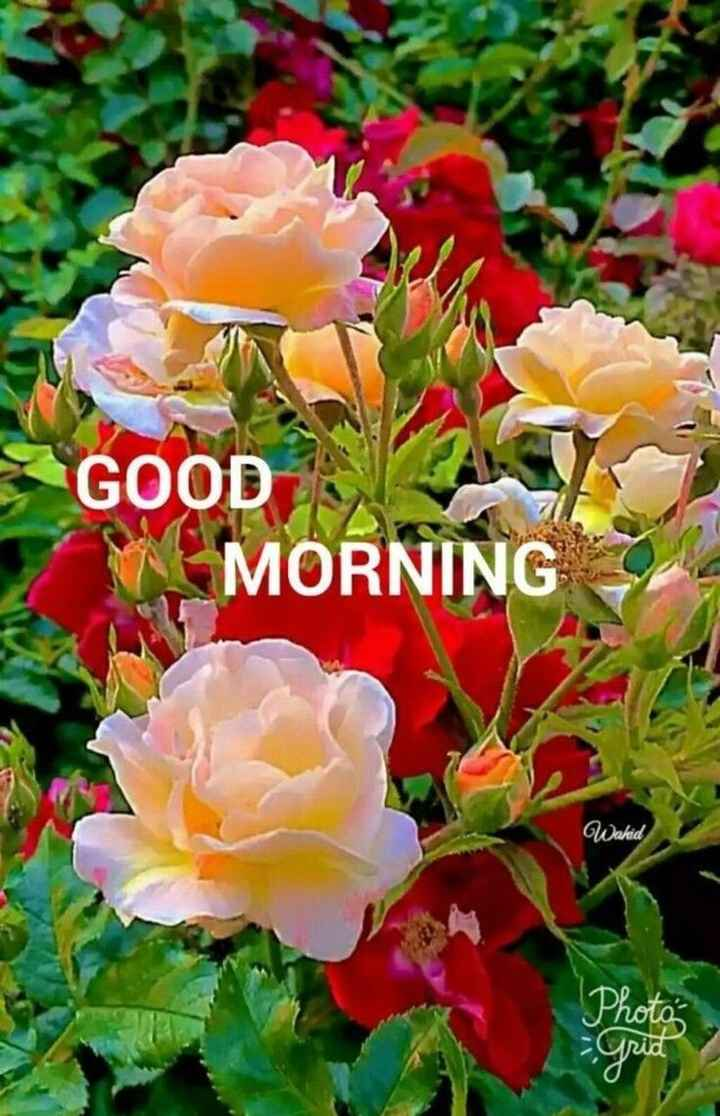 🌞সুপ্রভাত - GOOD MORNING Wahid - ShareChat