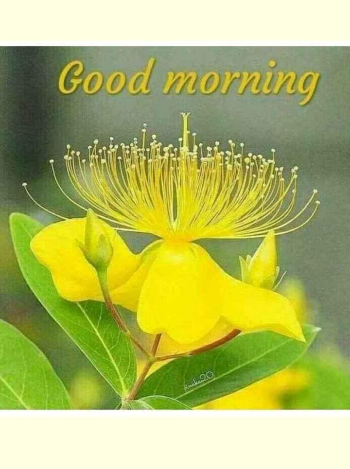 🌞সুপ্রভাত - Good morning Simaka 20 - ShareChat