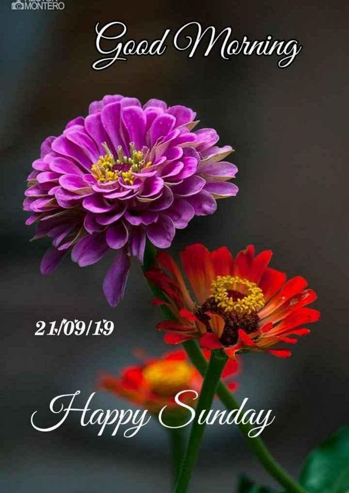 🌞সুপ্রভাত - MONTERO Good Morning 21 / 09 / 19 Happy Sunday - ShareChat