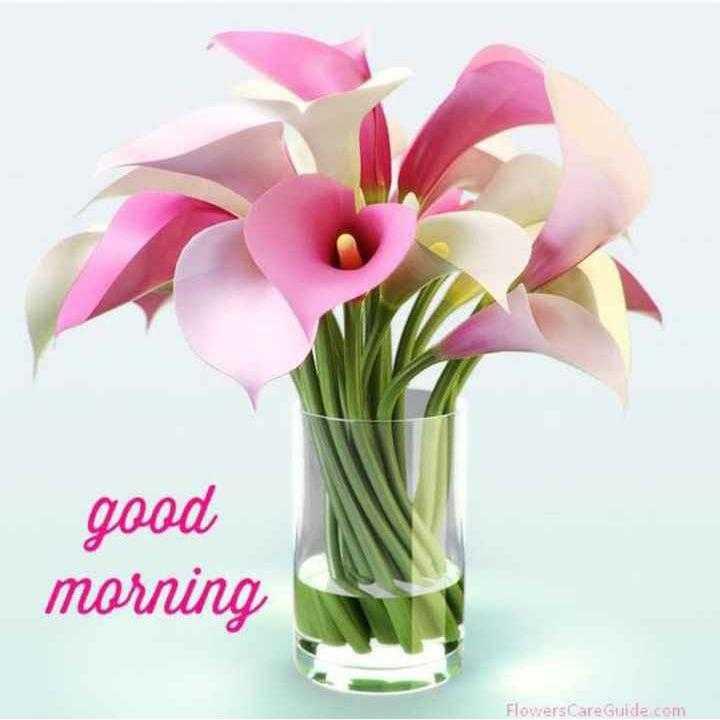 🌞সুপ্রভাত - good morning Flowers Care Guide com - ShareChat