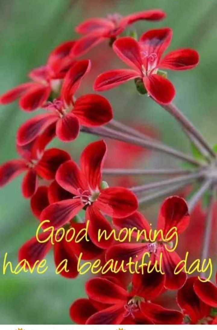 🌞সুপ্রভাত - Good morning have a beautiful day - ShareChat