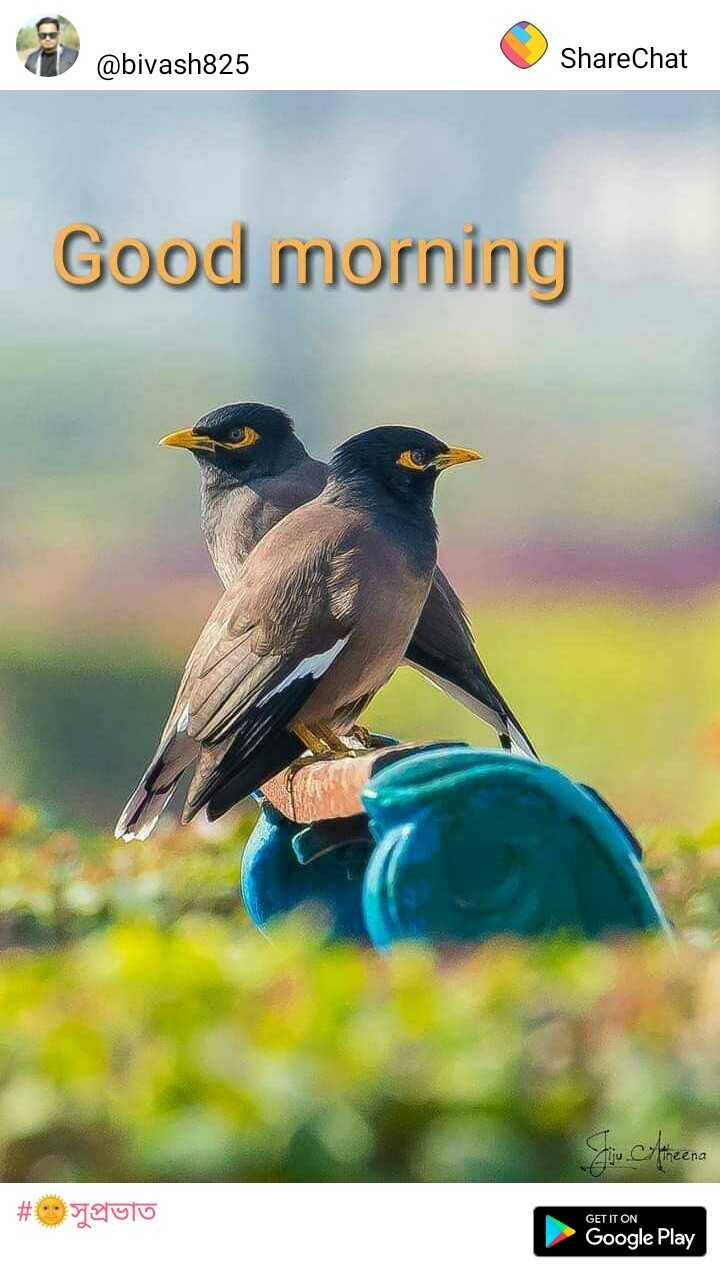 🌞 সুপ্ৰভাত - @ bivash825 ShareChat Good morning # paulo GET IT ON Google Play - ShareChat