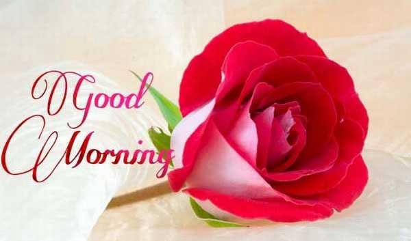 🌞 সুপ্ৰভাত - O Good ClMorning - ShareChat