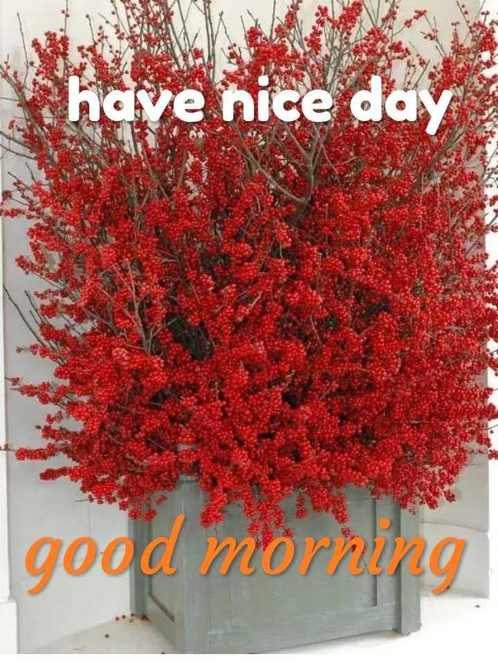 🌞 সুপ্ৰভাত - ave nice day good morning - ShareChat