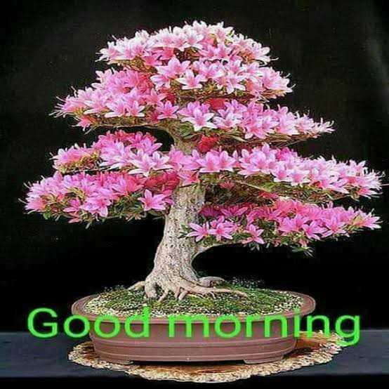 🌞 সুপ্ৰভাত - GOOU Thorning - ShareChat