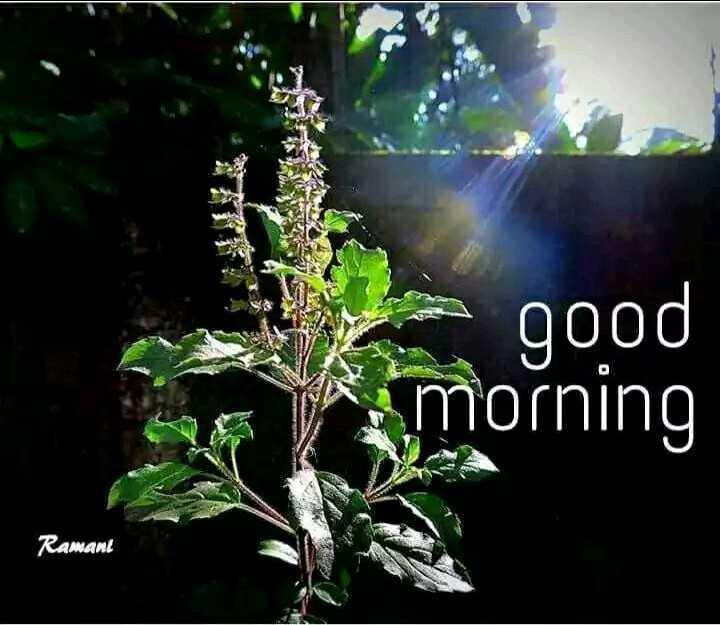 🌞 সুপ্ৰভাত - good morning Ramant - ShareChat