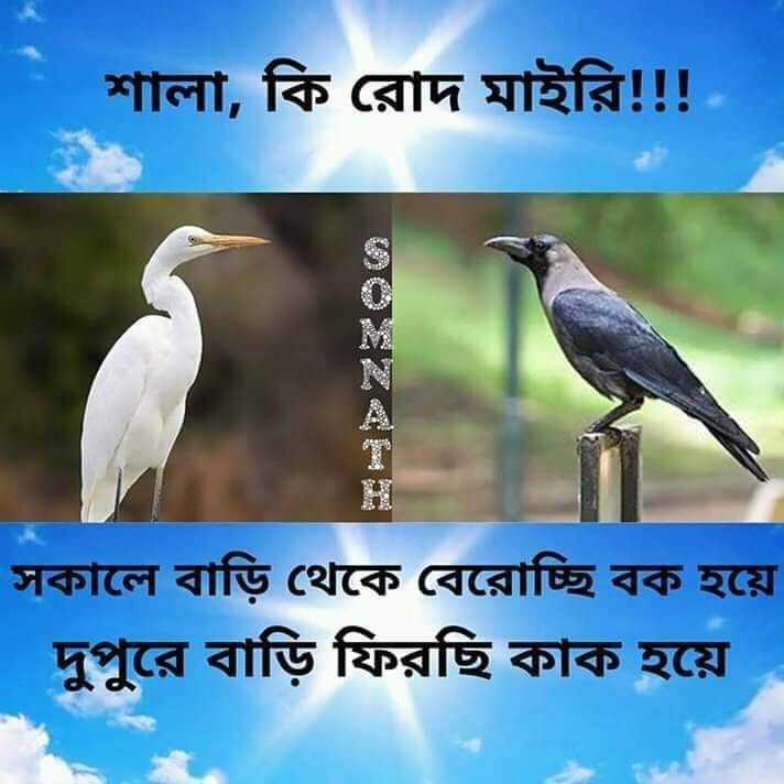 😂হাস্যকর ছবি - | শালা , কি রােদ মাইরি ! ! ! সকালে বাড়ি থেকে বেরােচ্ছি বক হয়ে | দুপুরে বাড়ি ফিরছি কাক হয়ে - ShareChat