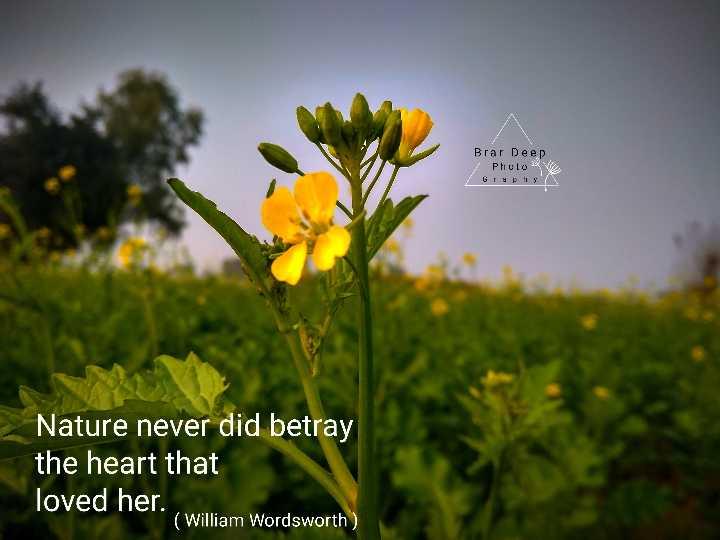 🔤 ਅੰਗ੍ਰੇਜੀ ਬੋਲਣਾ - Brar Deep Phulove GOPA Nature never did betray the heart that loved her . ( William Wordsworth ) - ShareChat
