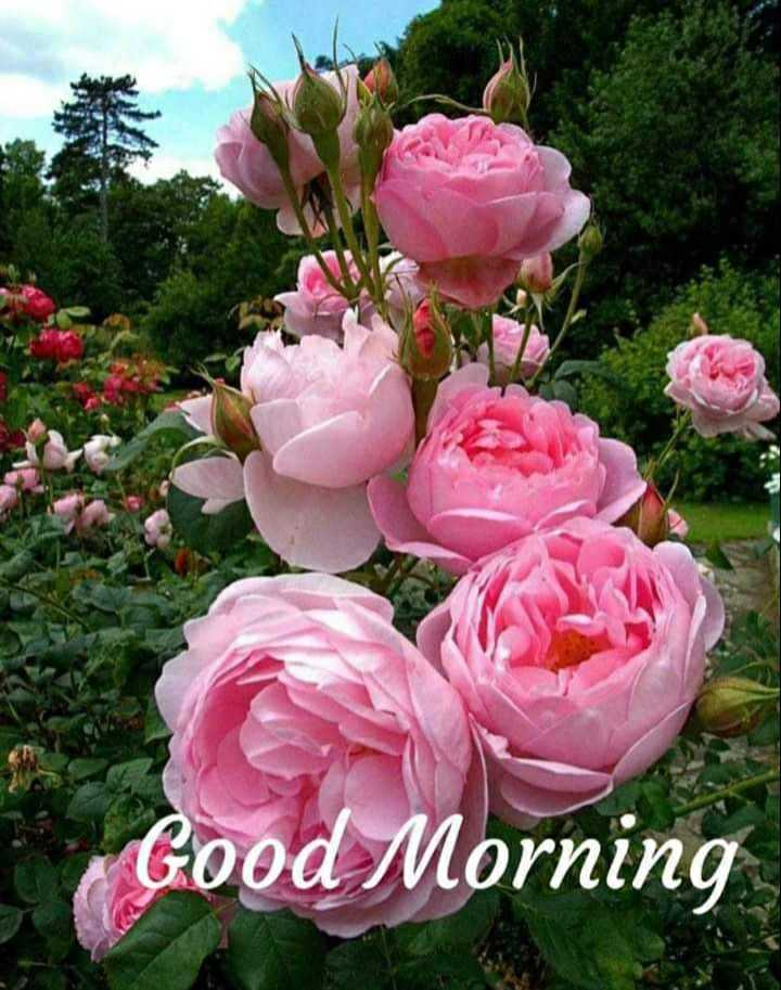 👸🏻 ਔਰਤ ਦਾ ਸਨਮਾਨ - Good Morning - ShareChat