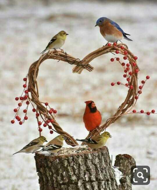 🌻 ਕੁਦਰਤ ਨਾਲ ਪਿਆਰ - ShareChat