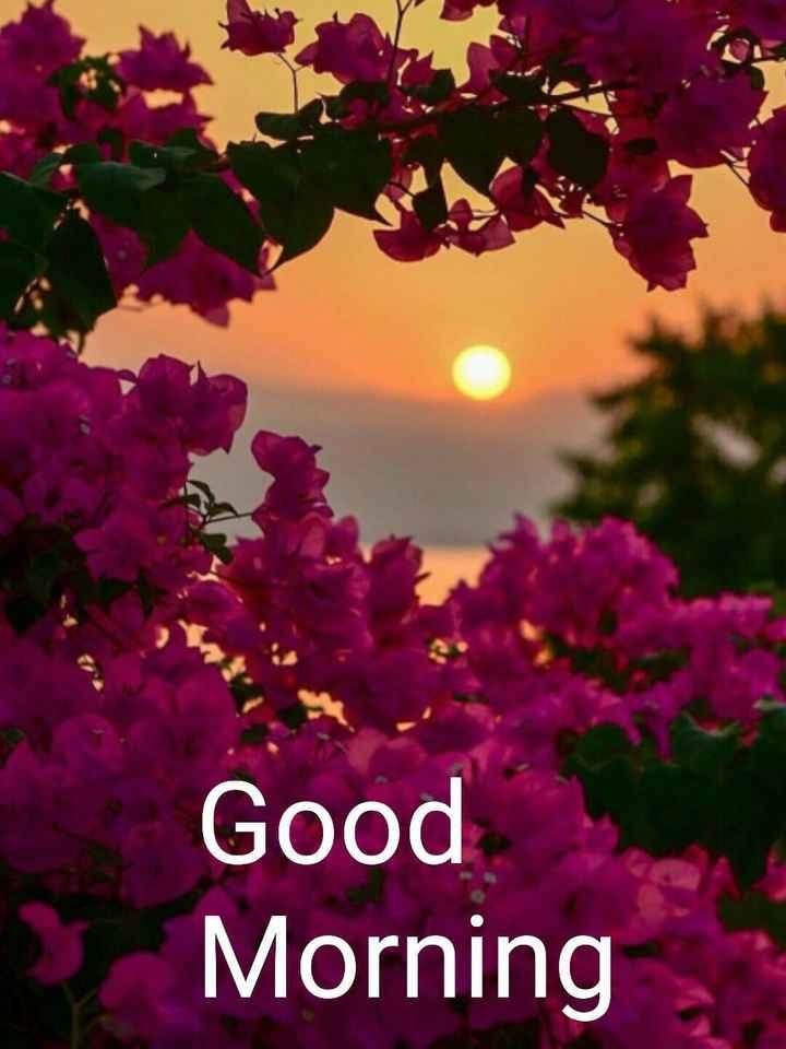 🌻 ਕੁਦਰਤ ਨਾਲ ਪਿਆਰ - Good » Morning - ShareChat