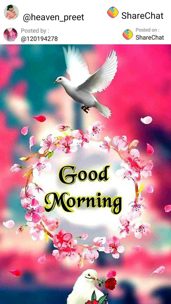 ਗਪ ਸ਼ਪ ਤੇ ਚਾਹ ਦਾ ਕਪ - @ heaven preet ShareChat Posted by : @ 120194278 Posted on : ShareChat Good Morning - ShareChat