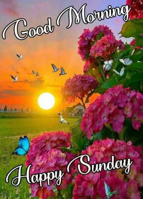 🌇ਗੁੱਡ ਈਵਨਿੰਗ - Good Morning Sunday Happy - ShareChat