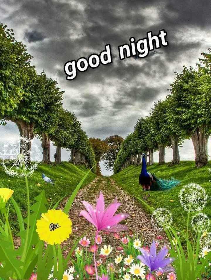 🌙  ਗੁੱਡ ਨਾਇਟ - good night EEN - ShareChat