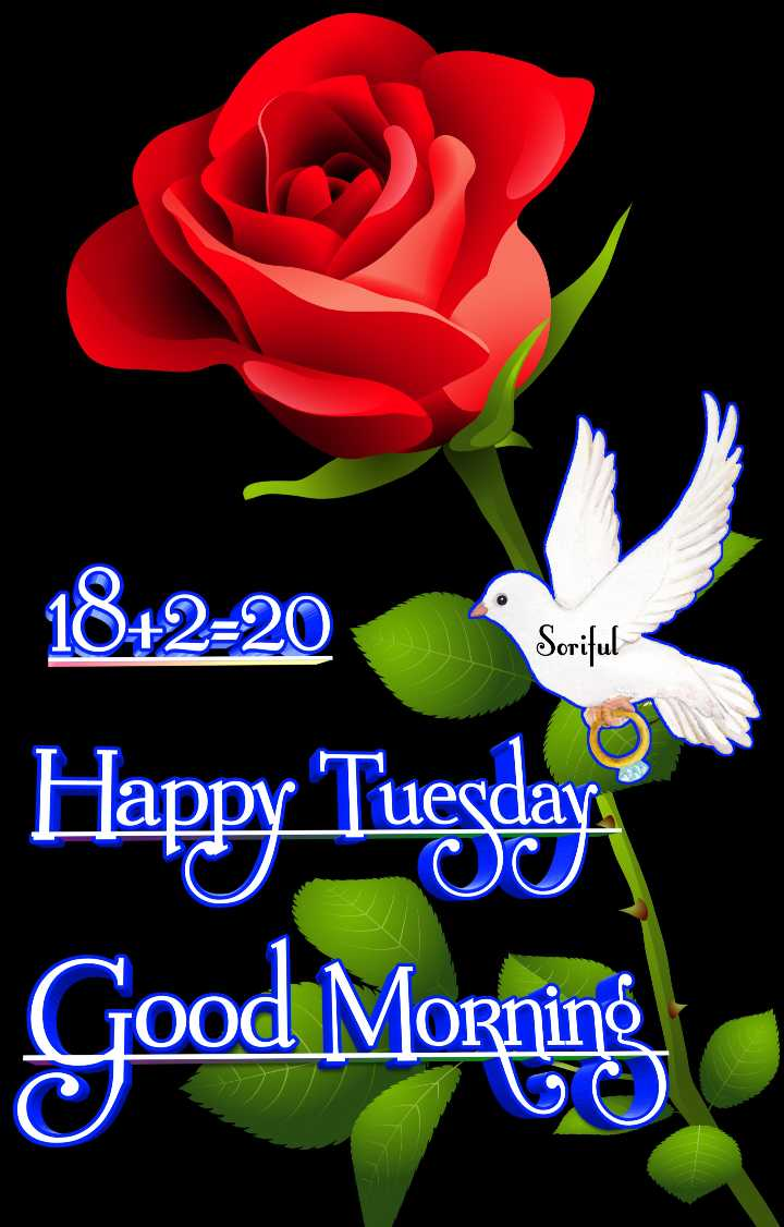 🌅 ਗੁੱਡ ਮੋਰਨਿੰਗ - 1842 - 20 Soriful Happy Tuesday Good Morning 50 - ShareChat