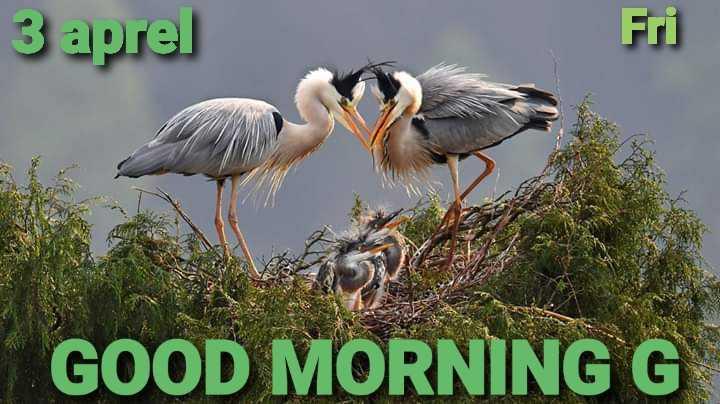 🌅 ਗੁੱਡ ਮੋਰਨਿੰਗ - 3 aprel GOOD MORNING G - ShareChat