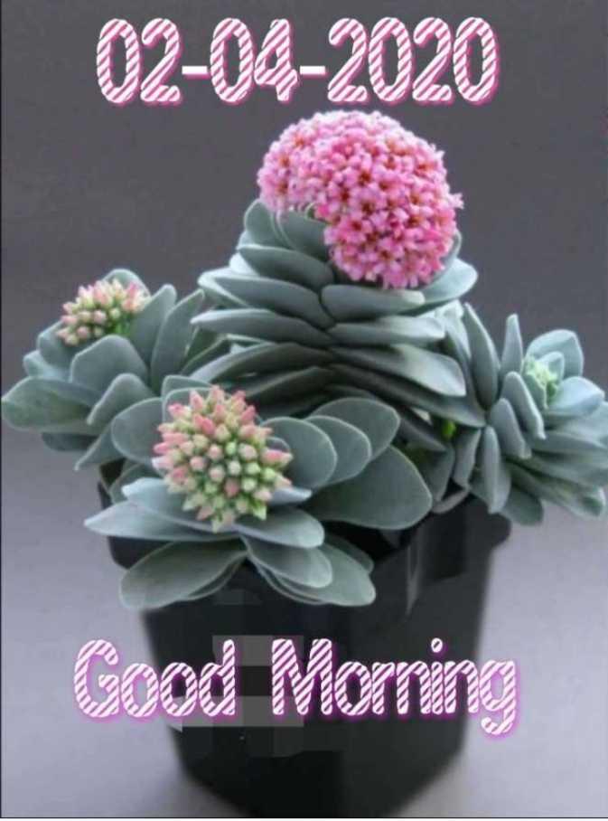 🌅 ਗੁੱਡ ਮੋਰਨਿੰਗ - 02 - 04 - 2020 Good Mornin - ShareChat