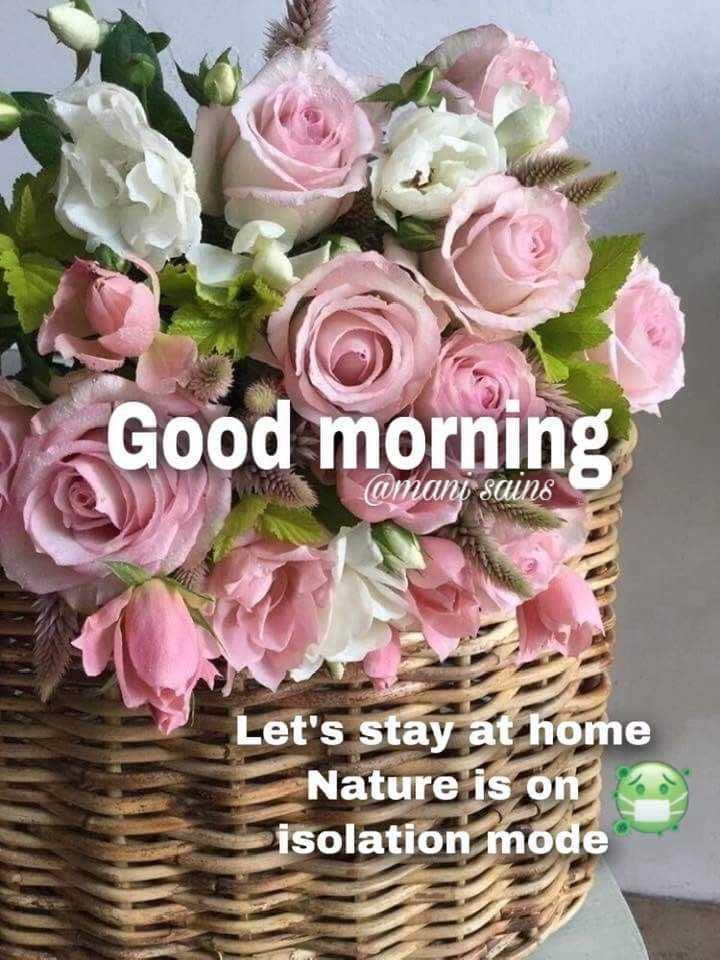 🌅 ਗੁੱਡ ਮੋਰਨਿੰਗ - Good morning @ mani sains Let ' s stay at home Nature is on isolation mode - ShareChat