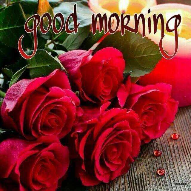 🌅 ਗੁੱਡ ਮੋਰਨਿੰਗ - _ Pood morning - ShareChat