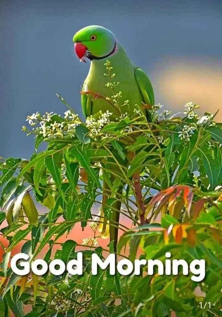 🌅 ਗੁੱਡ ਮੋਰਨਿੰਗ - IGood Morning - 1 / 1 - ShareChat