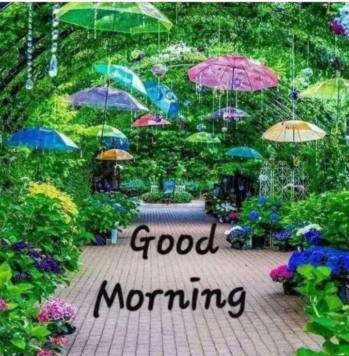 🌅 ਗੁੱਡ ਮੋਰਨਿੰਗ - * Good Gi Morning - ShareChat