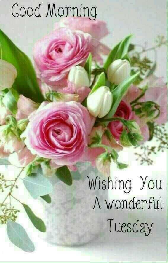 🌅 ਗੁੱਡ ਮੋਰਨਿੰਗ - Good Morning Wishing you A wonderful Tuesday - ShareChat