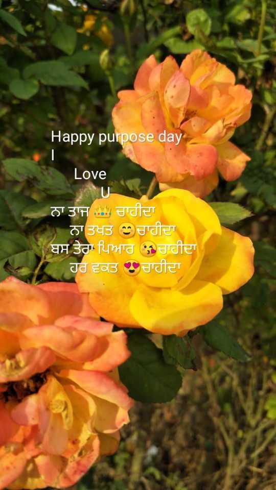 💌ਪਿਆਰ ਦੀ ਚਿੱਠੀ💍 - Happy purpose day Love ਨਾ ਤਾਜ : ਚਾਹੀਦਾ ਨਾ ਤਖਤ ੦ਚਾਹੀਦਾ ਬਸ ਤੇਰਾ ਪਿਆਰ ਚਾਹੀਦਾ ਹਰ ਵਕਤ ਚਾਹੀਦਾ - ShareChat