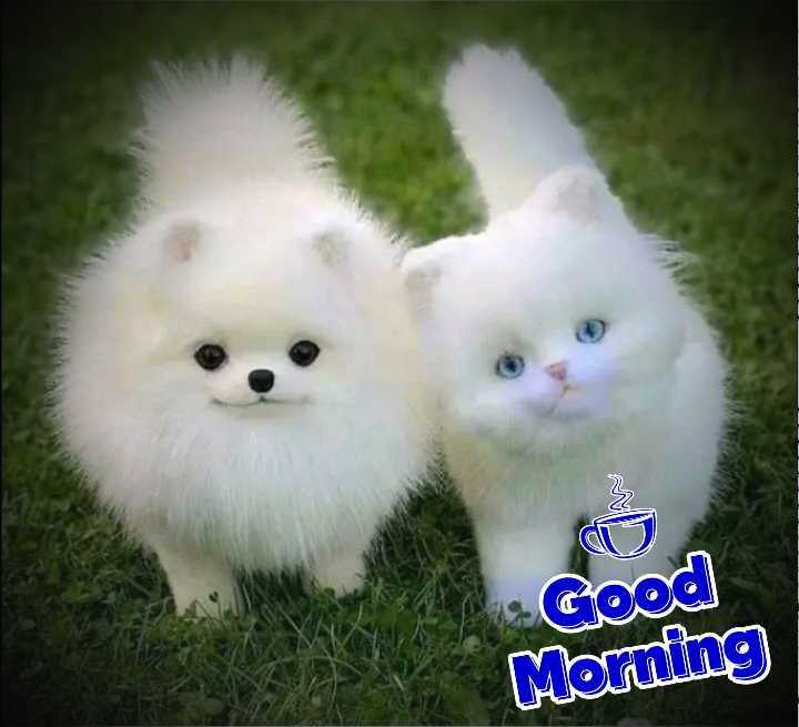😻 ਬਿੱਲੀਆਂ - Good Morning - ShareChat