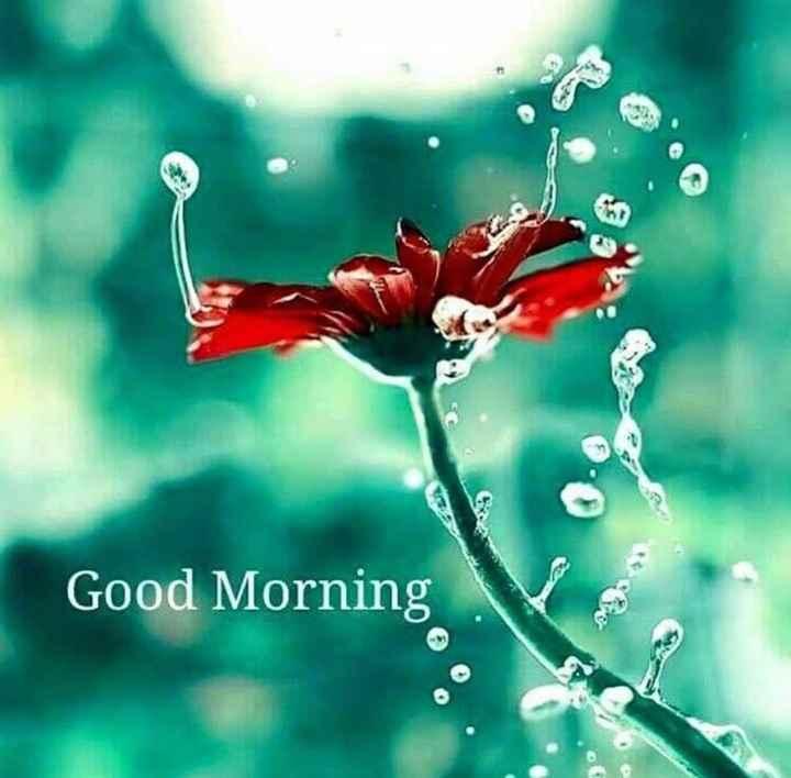 ਮੇਰੇ ਪਿੰਡ ਦੀ ਸੱਜਰੀ ਸਵੇਰ ⛅ - Good Morning - ShareChat