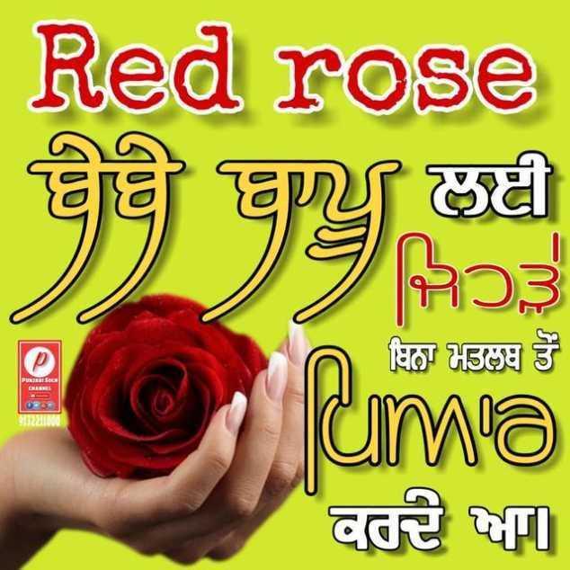 🌹 ਰਾਸ਼ਟਰੀ ਗੁਲਾਬ ਦਿਵਸ - Red rose ਬੇਬੇ ਬਾਪੂ ਲਈ ਬਿਨਾ ਮਤਲਬ ਤੋਂ uma ਕਰਦੇ ਆ - ShareChat