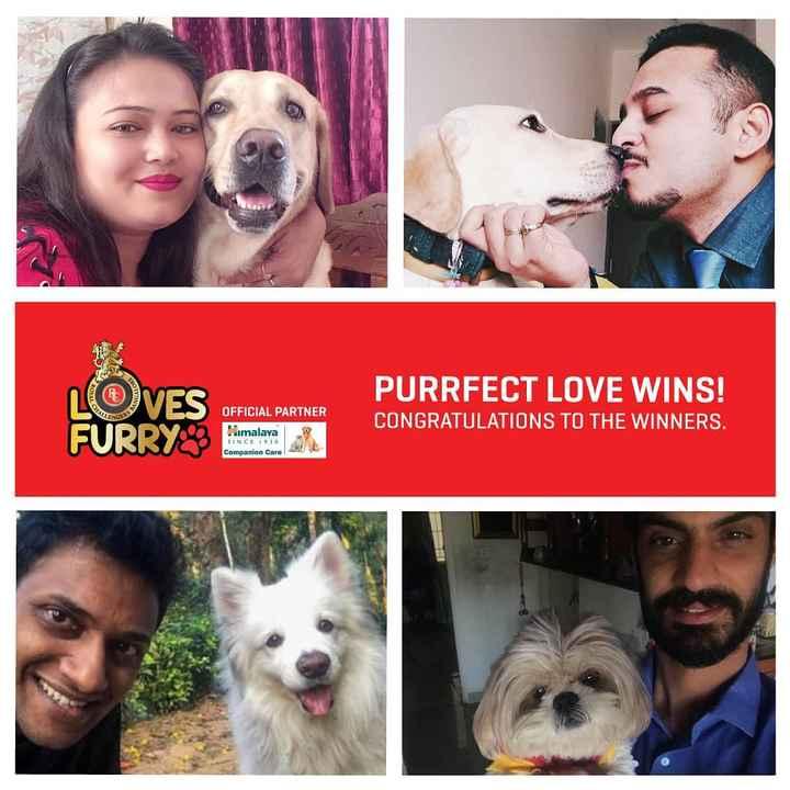 🏏 ਰੋਇਲ ਚੈਲੇੰਜਰਸ ਬੇੰਗਲੁਰੂ - PURRFECT LOVE WINS ! LOVES FURRY OFFICIAL PARTNER Himalaya CONGRATULATIONS TO THE WINNERS . 5INCE 1930 Companion Care - ShareChat