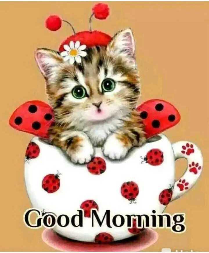 😘ਲਵ ਯੂ ਮੇਰੀ ਬੇਬੇ ਦੀ ਨੂੂੰਹ ਨੂੰ😘 - Good Morning - ShareChat