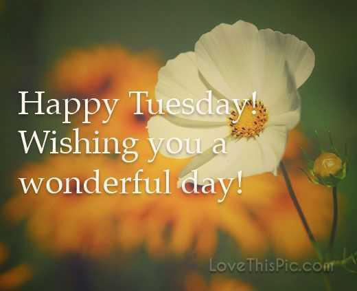 🙏ਸ਼ੁੱਭ ਮੰਗਲਵਾਰ - Happy Tuesday ! Wishing you a wonderful day ! LoveThisPic . com - ShareChat