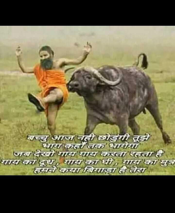 📷 ਸ਼ੇਅਰਚੈਟ ਕੈਮਰਾ ਫ਼ਿਲ੍ਟਰਸ - बच्चु आज नहीं छोड़ेगी तूझे भाग कहॉ तक भागेगा । जब देखो गाय गाय करता रहता है गाय का दूध , गाय का घी , गाय का मुत्र हमनेकया बिगाडाह तेरा - ShareChat