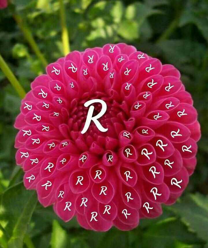 🔠 અક્ષર કળા - Ro RRR RRRR MRR dd PPR R RR R RR RR PARRA RRR PP RRR R RRR - ShareChat